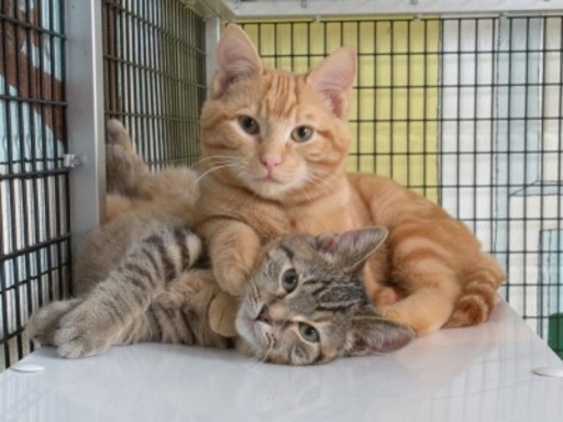 Two cats at the Arizona humane society