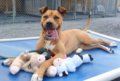 Dog with toys at the Arizona Humane Society