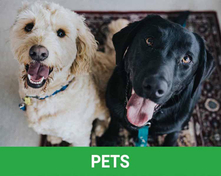 Rosarito Beach Pet Services