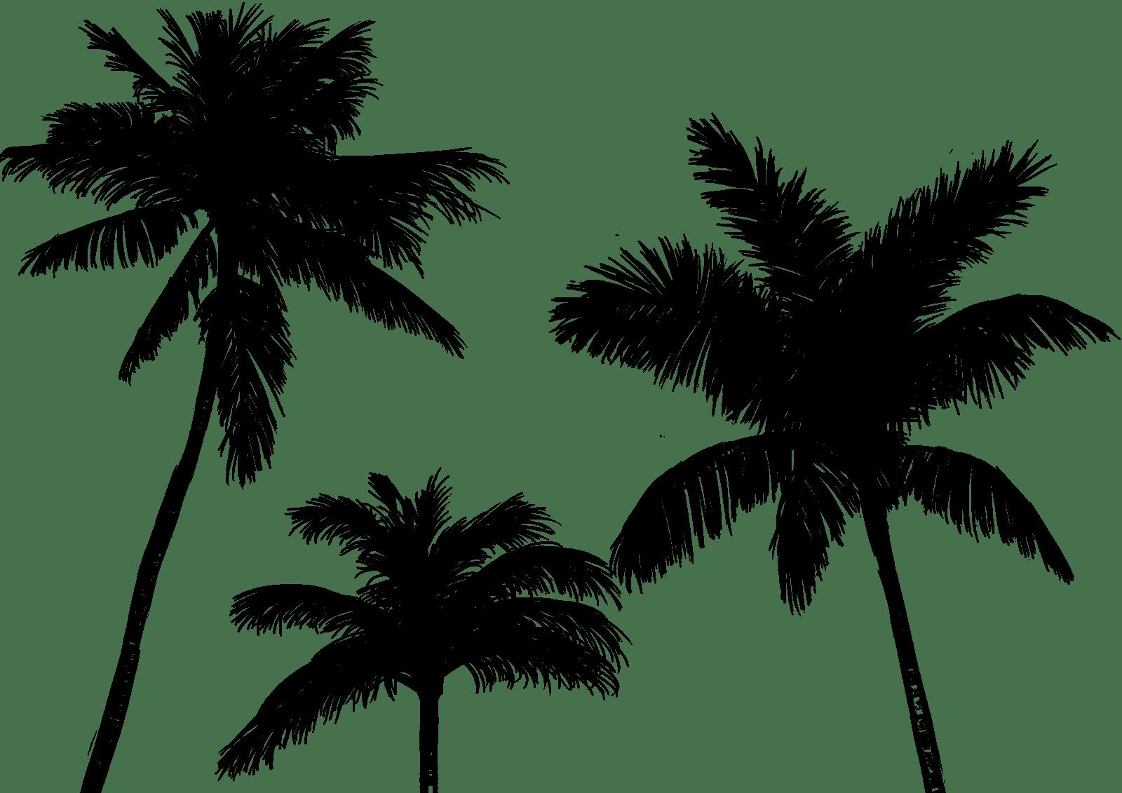 Sketch palm trees