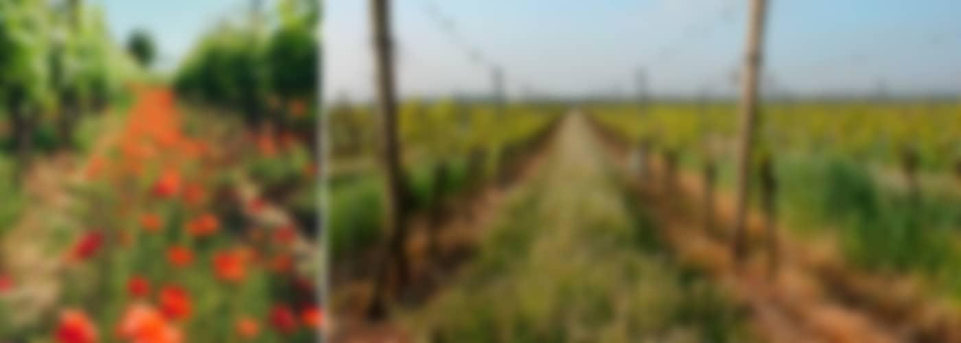 2020 Grohsartig Weißburgunder/ Chardonnay