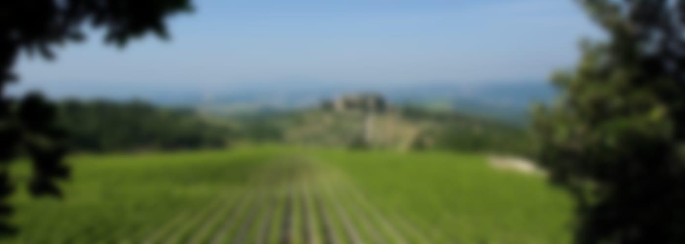 CastelGiocondo Grappa di Brunello