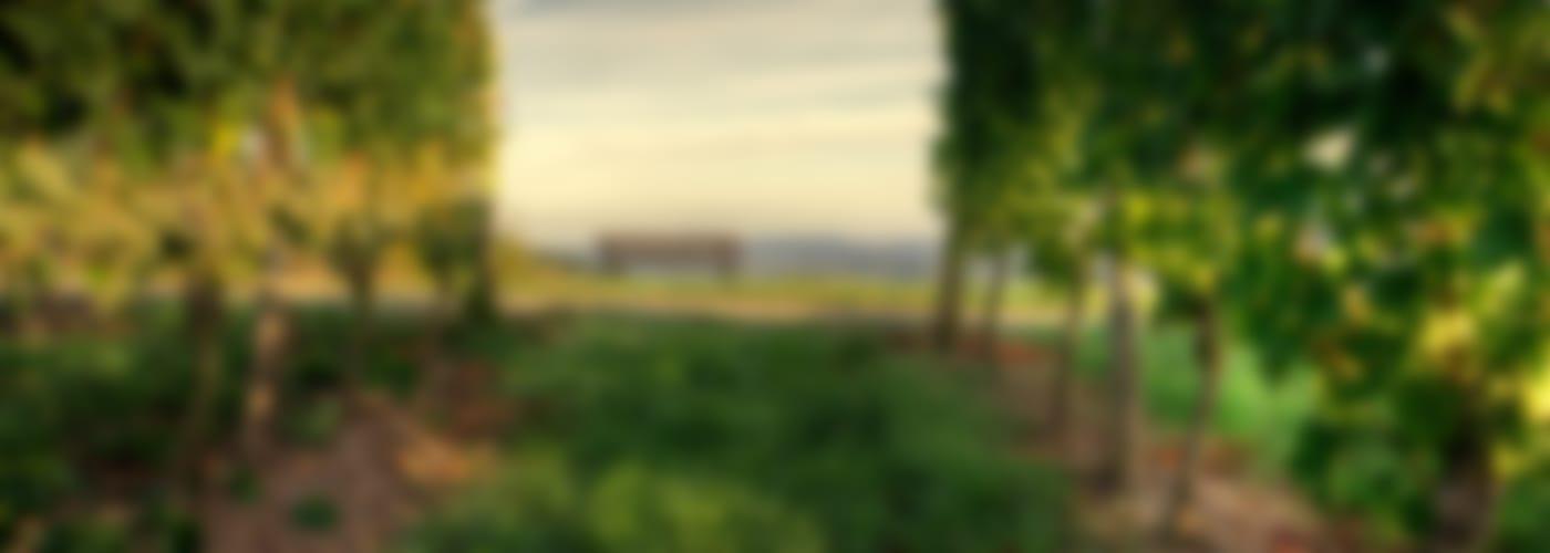 2019 Hexamer Riesling Eisendell an der Südseite - Weißer Schafferwein 2021