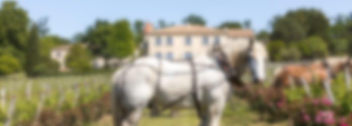 2015 Château Troplong Mondot