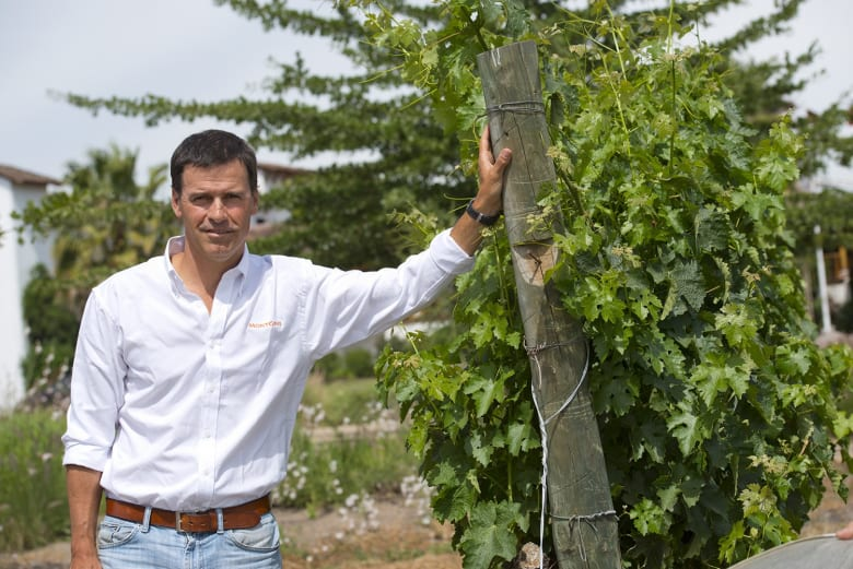 Viñas MontGras