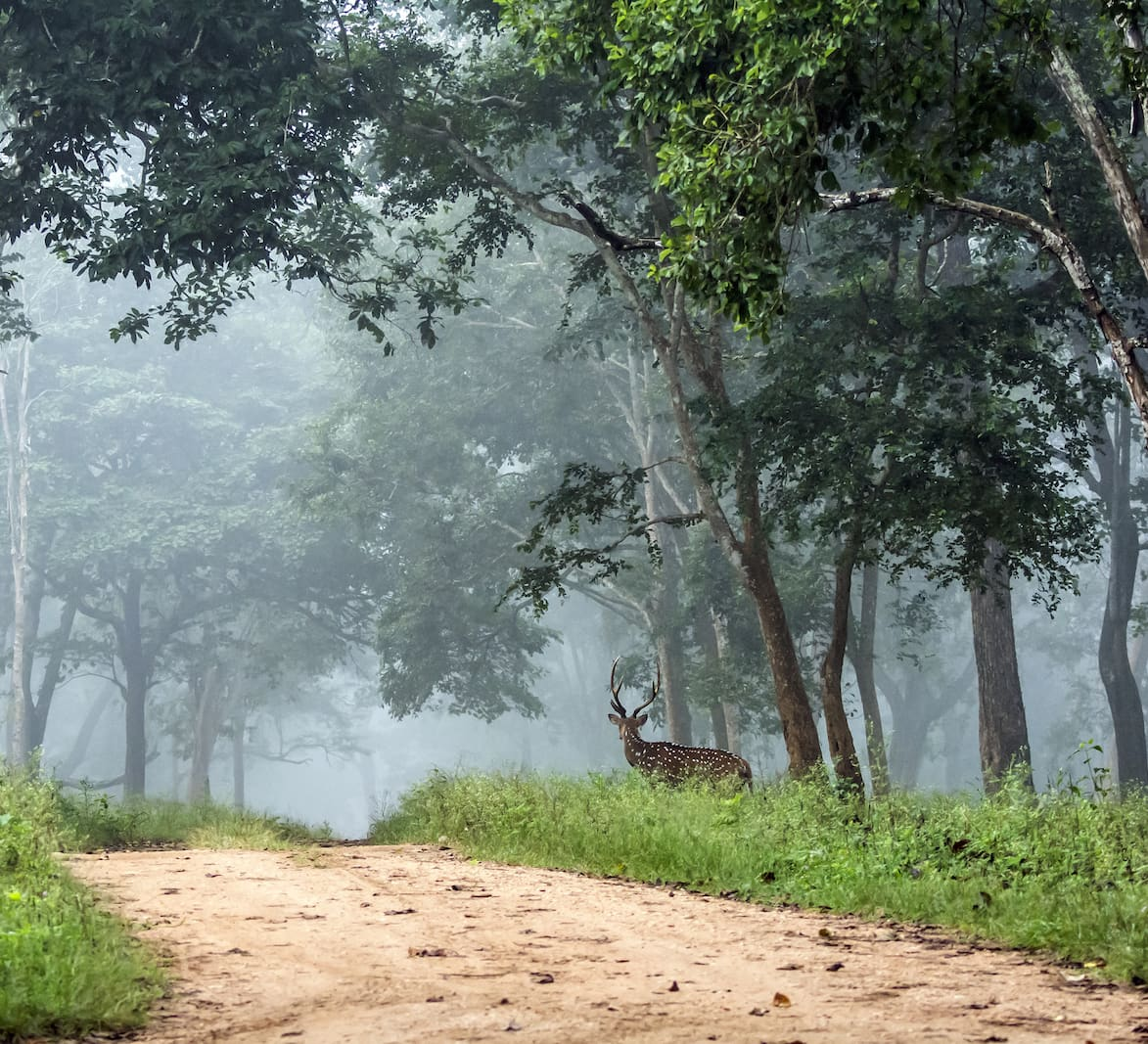 The Guide: Nagarhole National Park