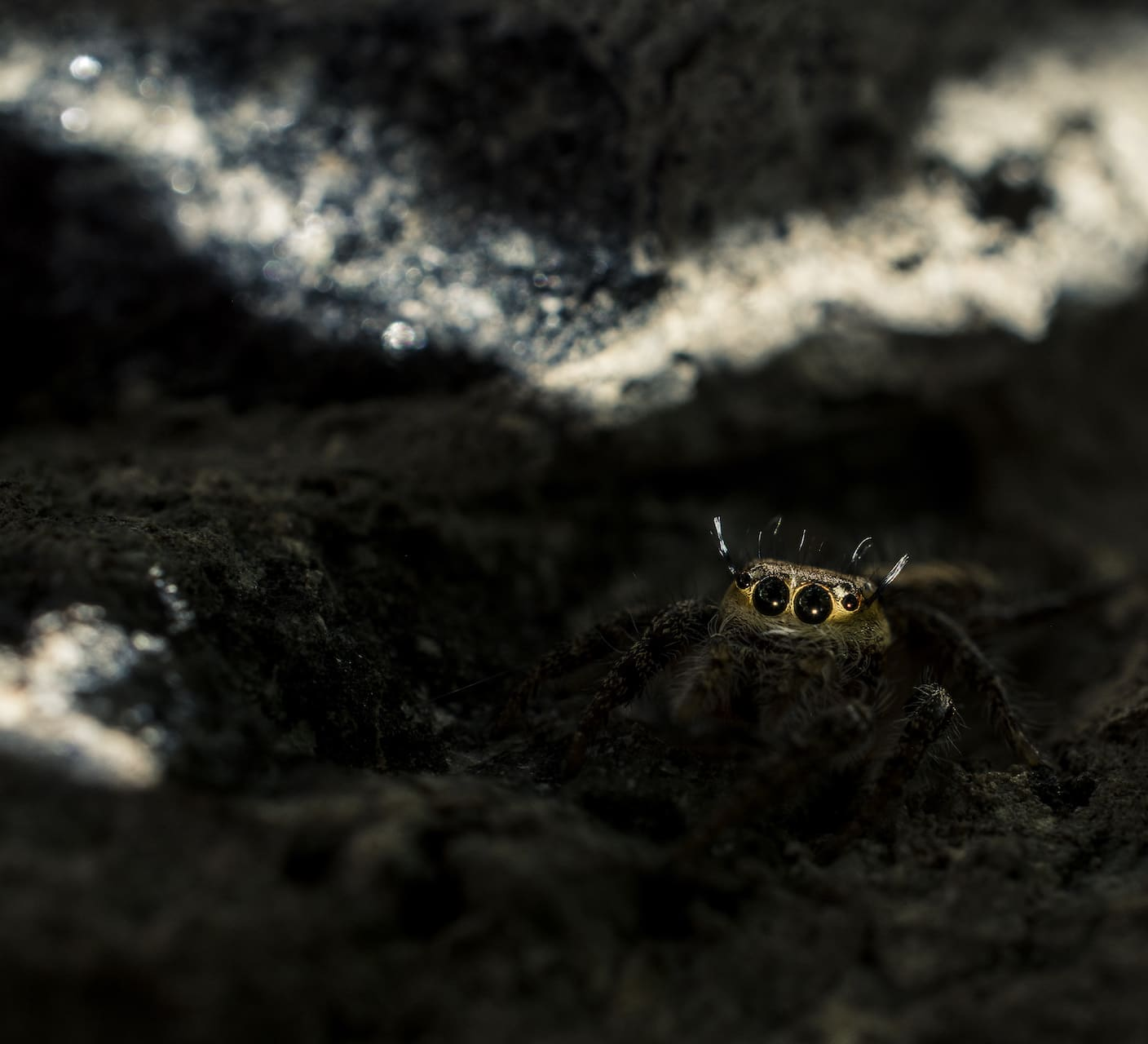 Leap of Faith: The Magical World of Jumping Spiders