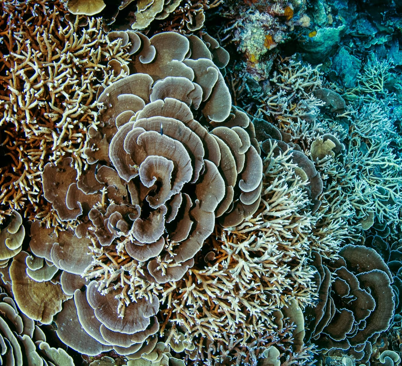 Life of Corals: The Origin Story