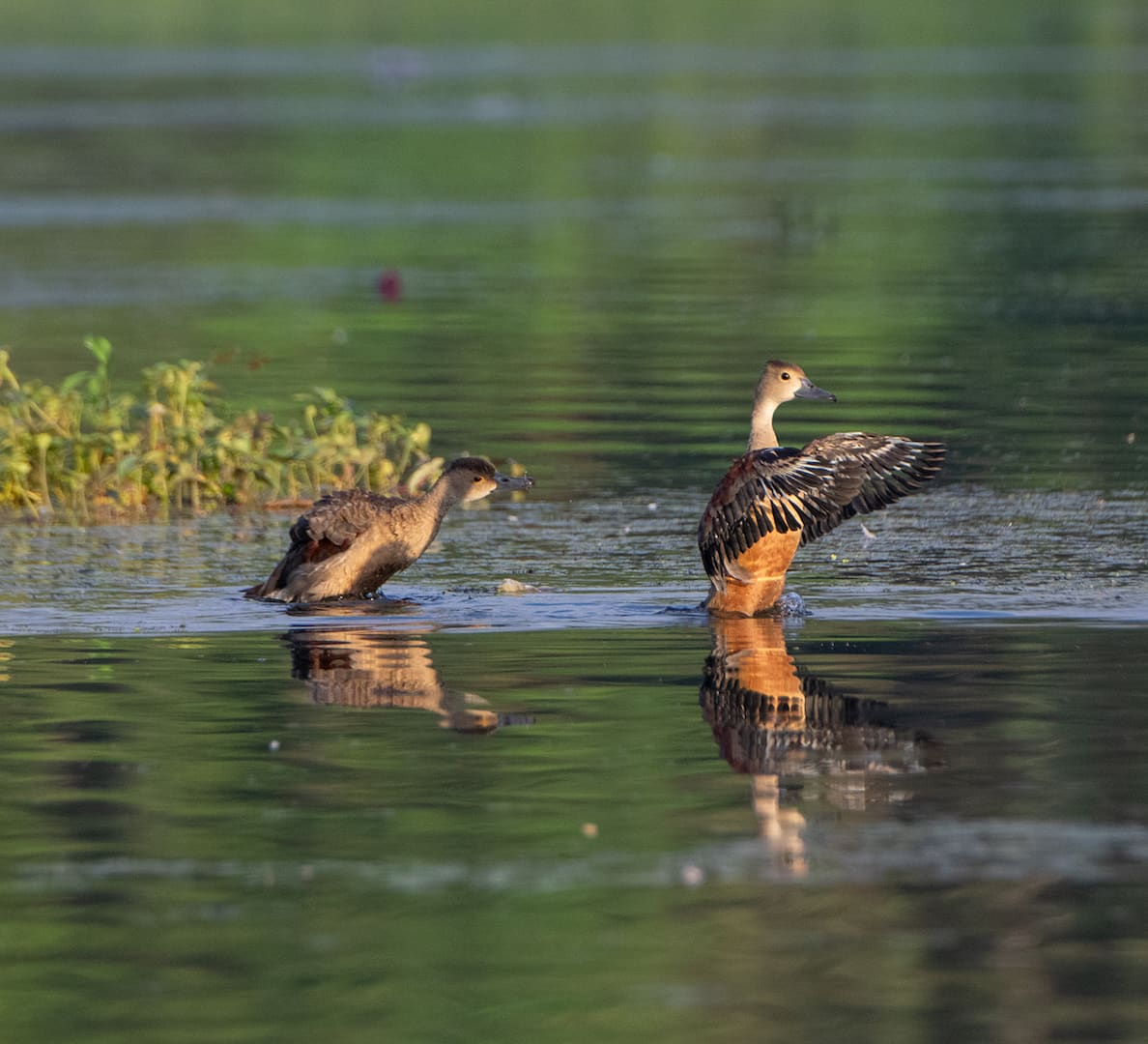 In the Heart of Suburban Mumbai, an Oasis for Birds and Birders