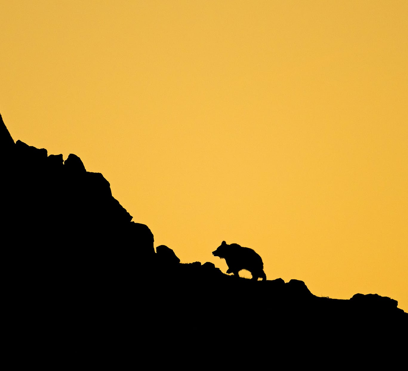 The Bear and I: A Quest to Photograph the Himalayan Brown Bear