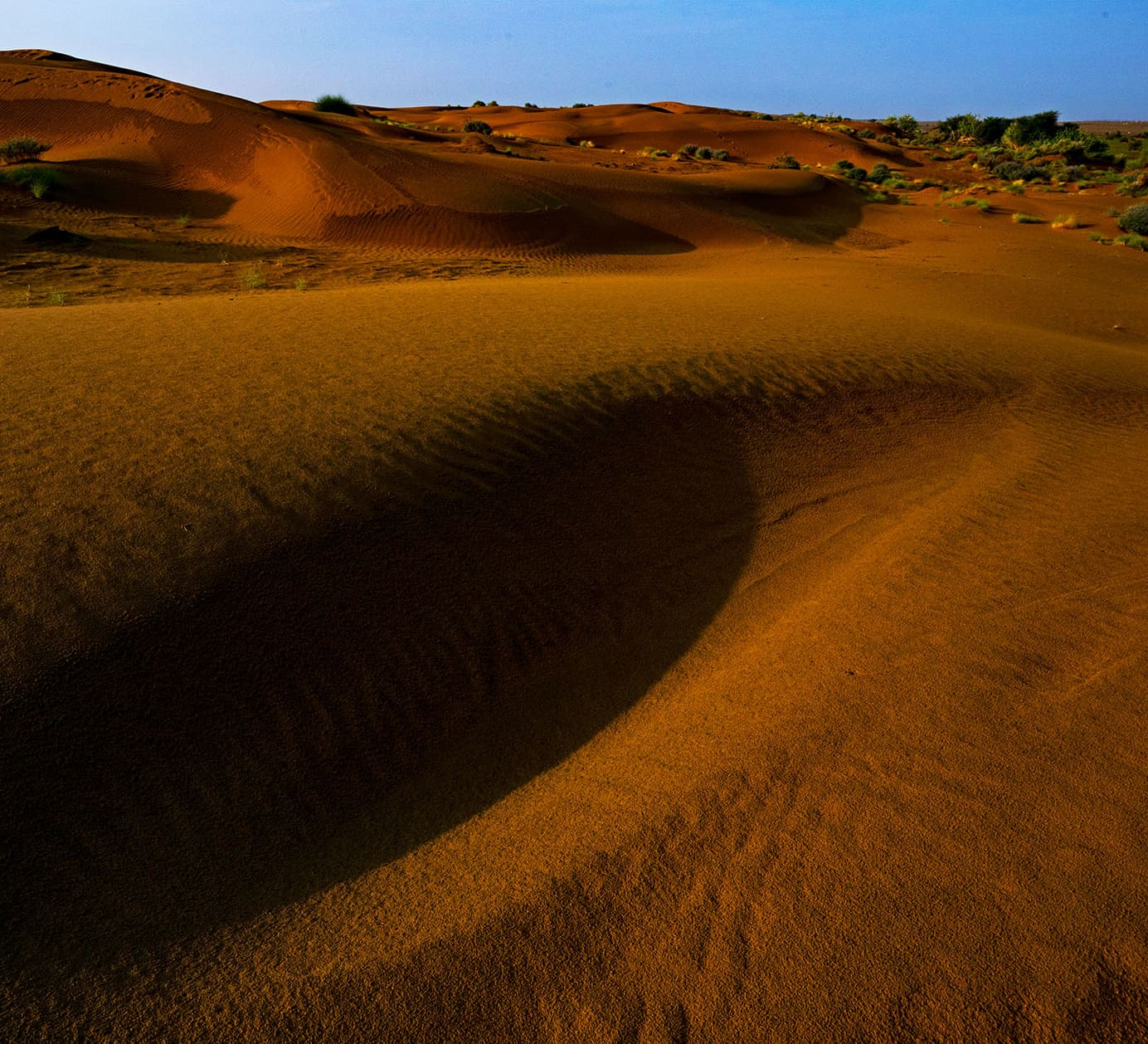 Desert National Park: The Abundant Life of the Sand and Scrubs