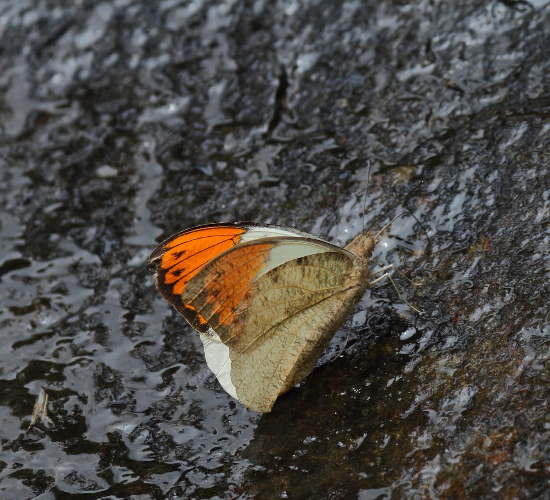 When Danger Lurks: Toxic Beauties in Action