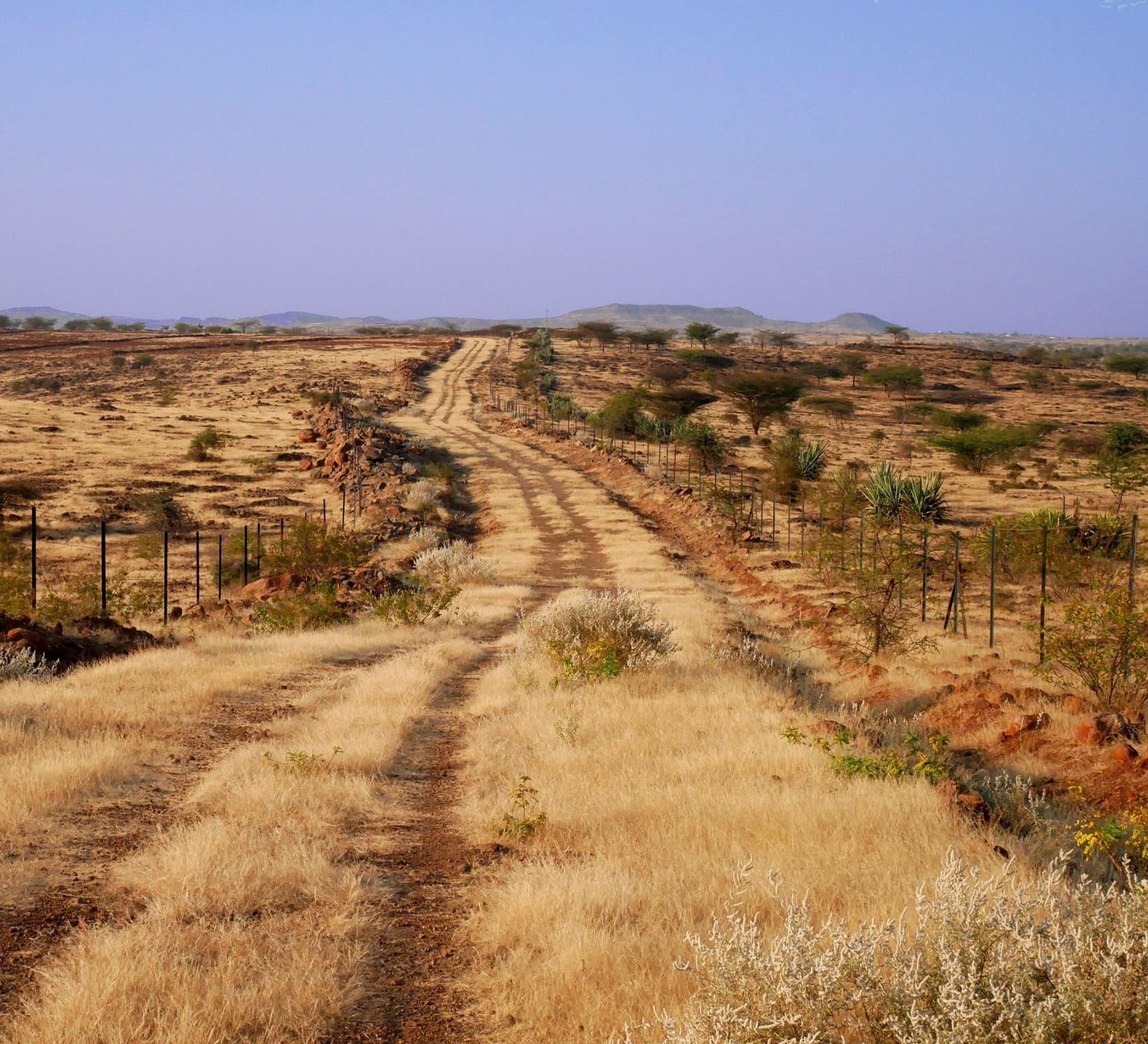 The Wilds of Saswad: The Vibrant Grassland Near Pune