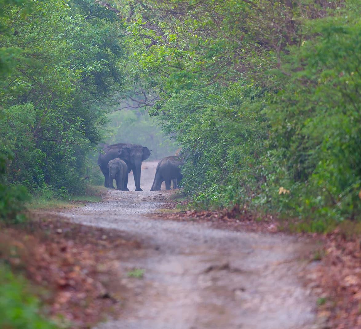 When Elephants Rage
