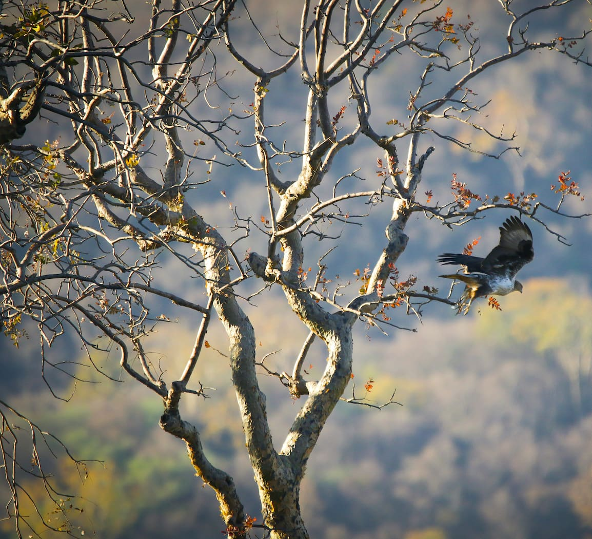Avian Windfall at Todgarh-Raoli and Kumbalgarh
