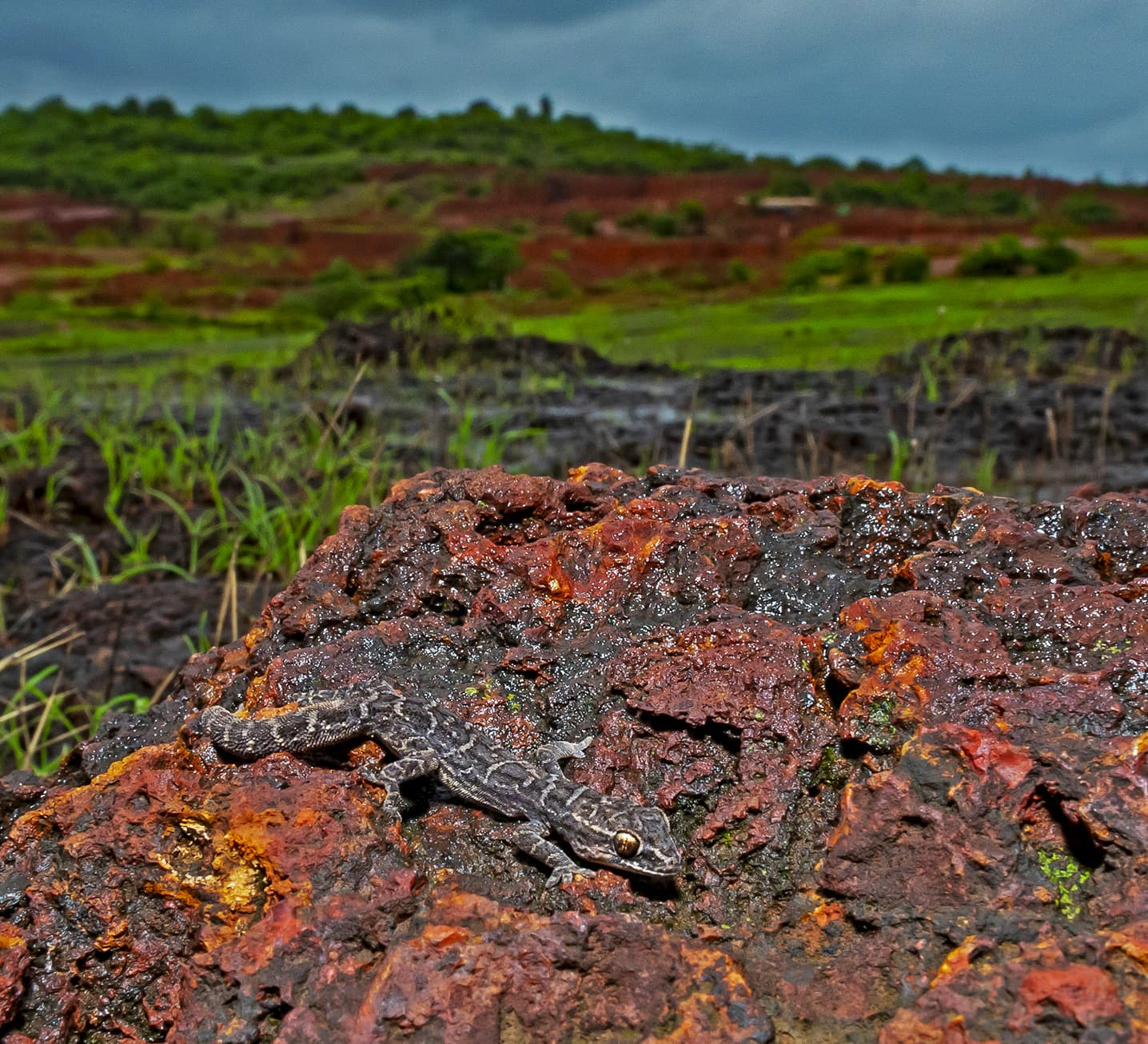 In the Laterite Plateaus of Maharashtra, Rock Bottom is a Wonderful Place