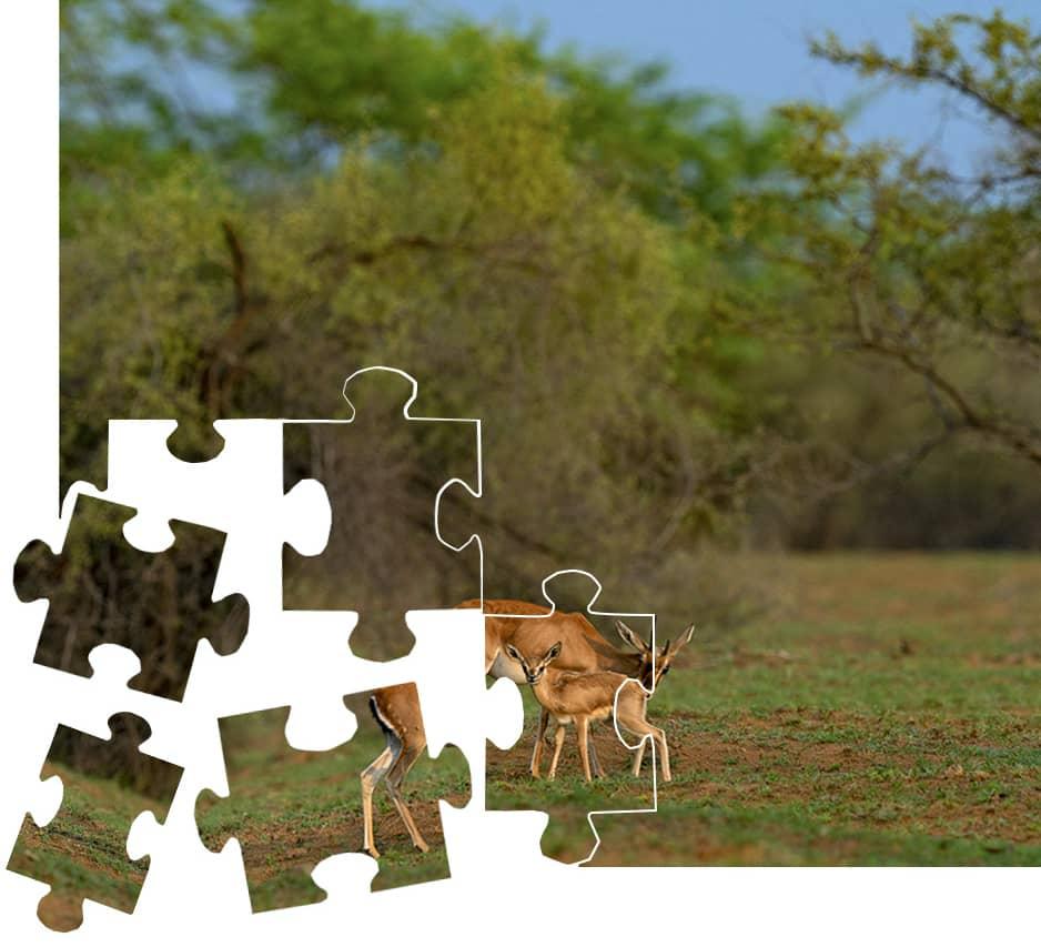Solve this jigsaw from Desert National Park
