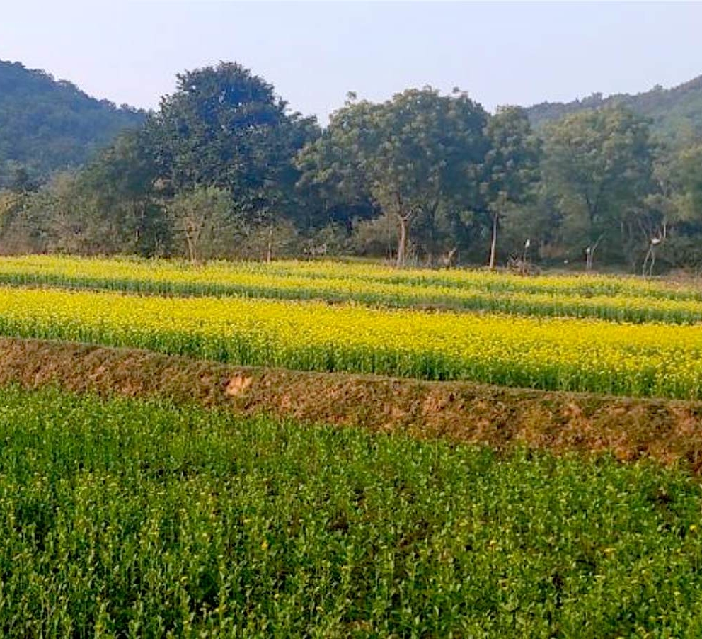 In Purulia, Villagers Plant Forests to Restore Lives
