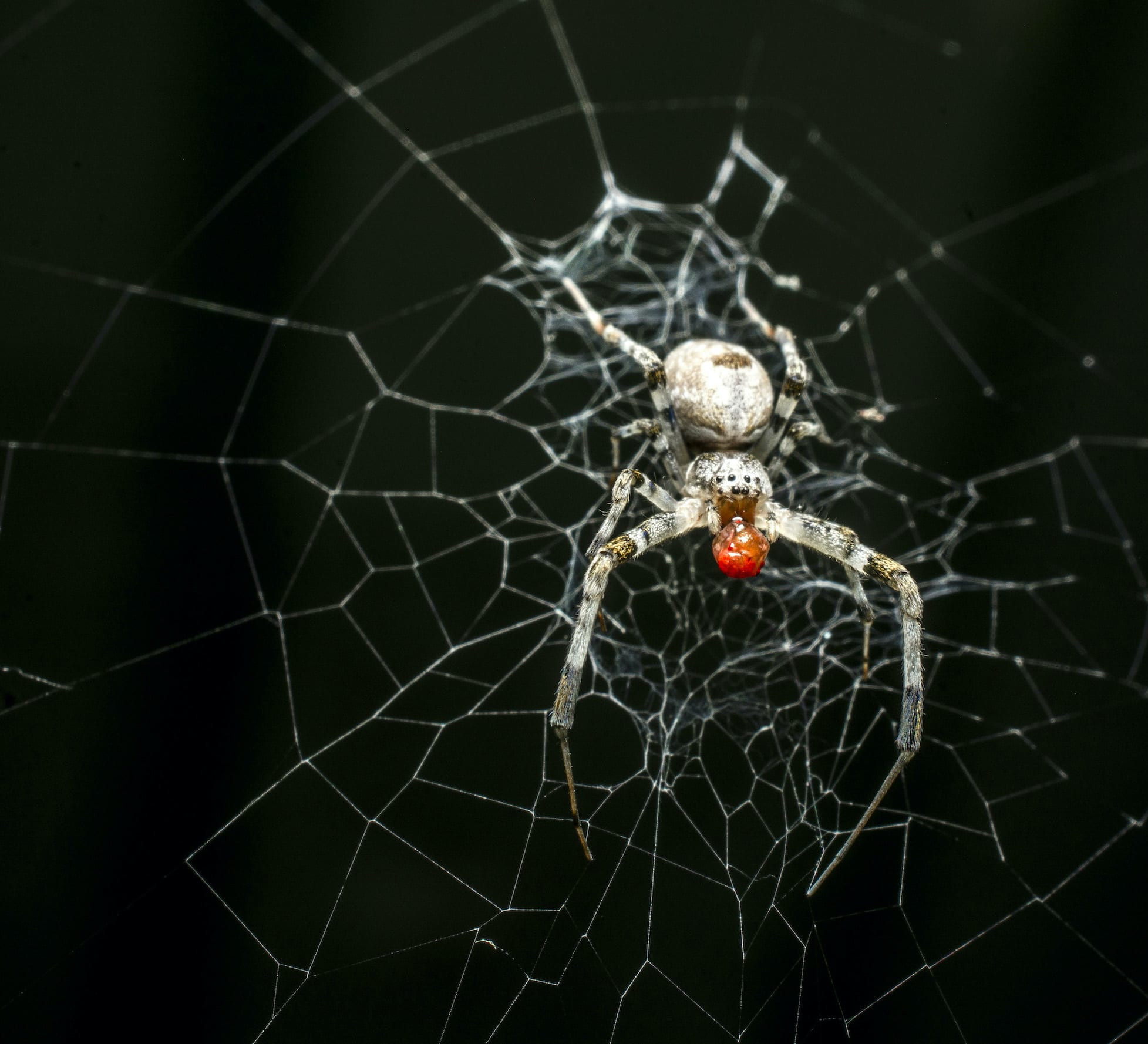 Orb-weaving Spiders in Art and Imagination