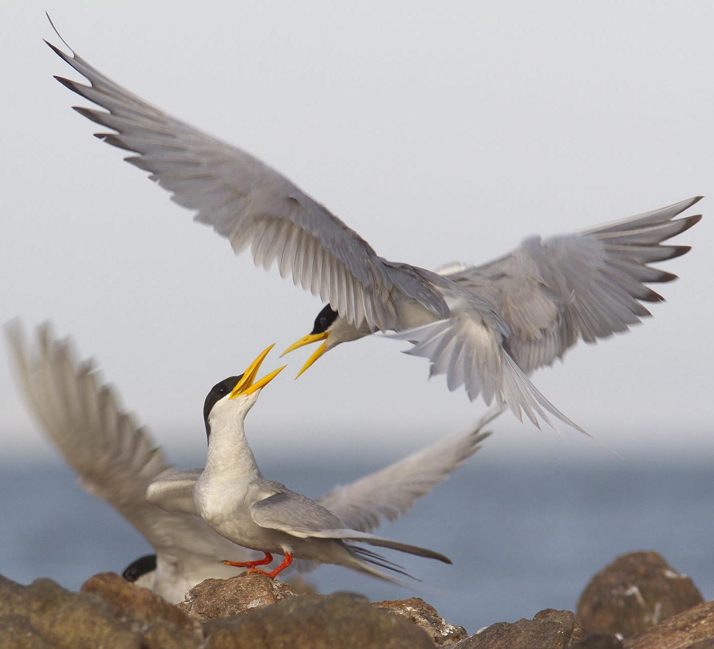 The Guide: Bhadra Wildlife Sanctuary