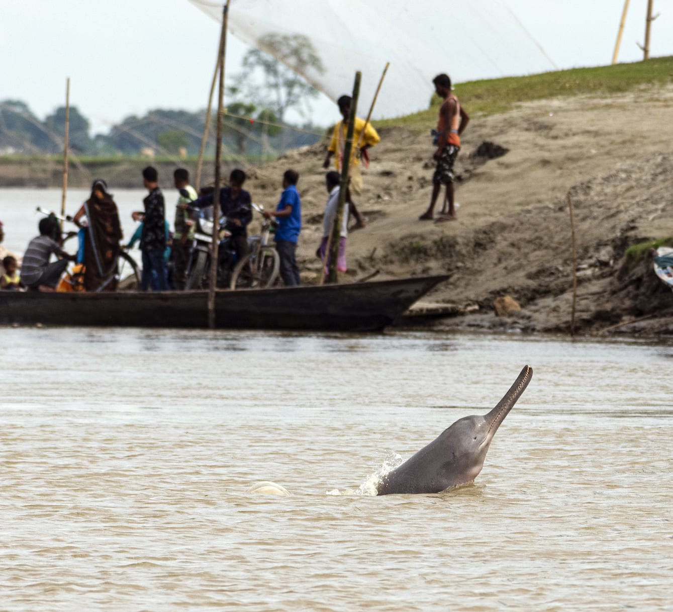 In Deep Waters: The Conservation Saga of the Ganges River Dolphin
