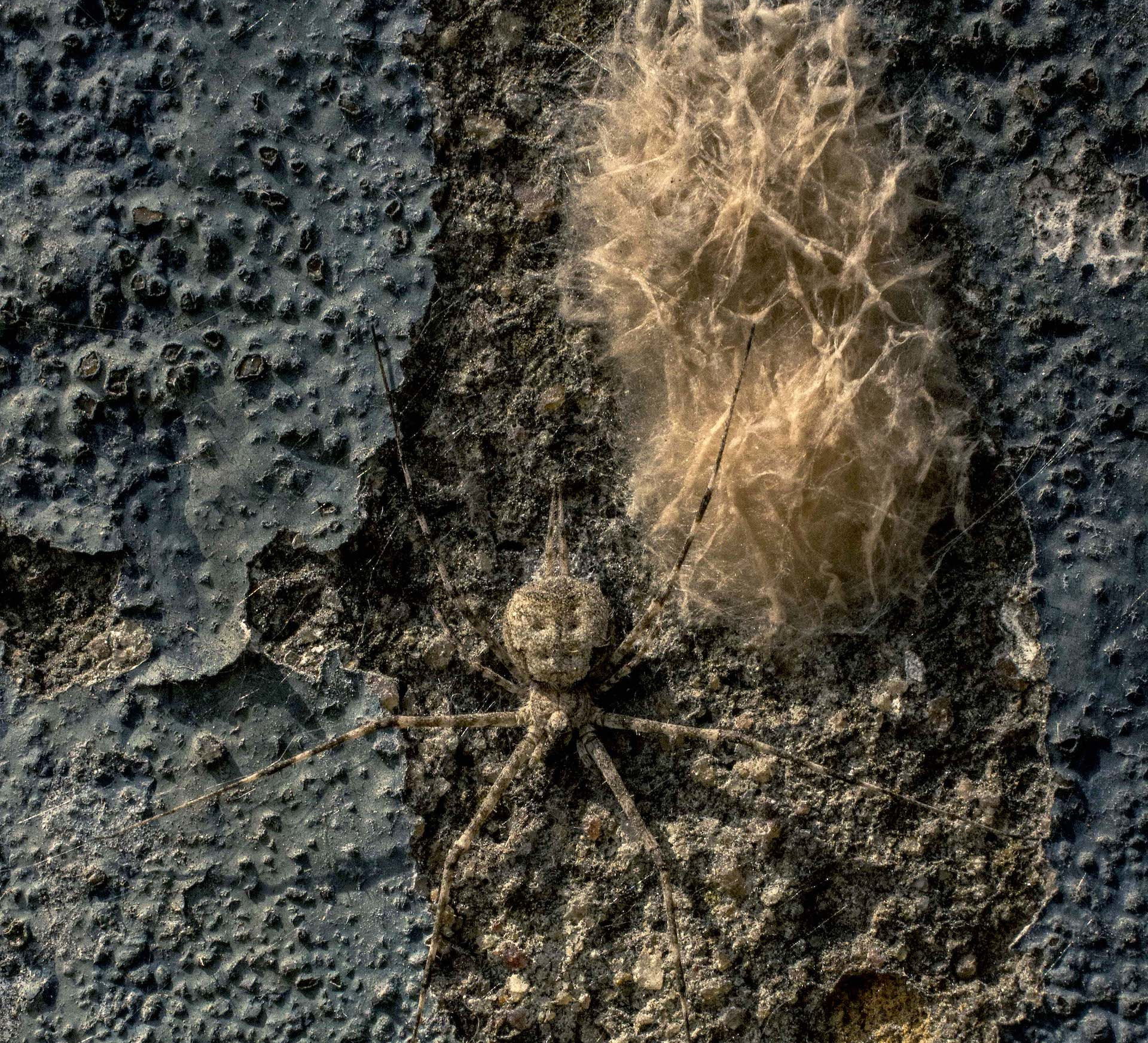 Life on the Vertical: Exploring Nature on City Walls