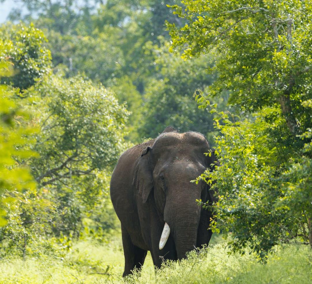 Choosing between elephants and humans in the Nilgiris
