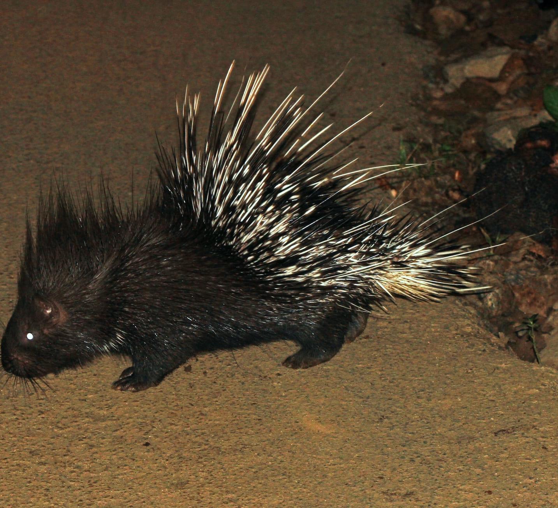 Delhi and Haryana's Aravallis home to rare wildlife