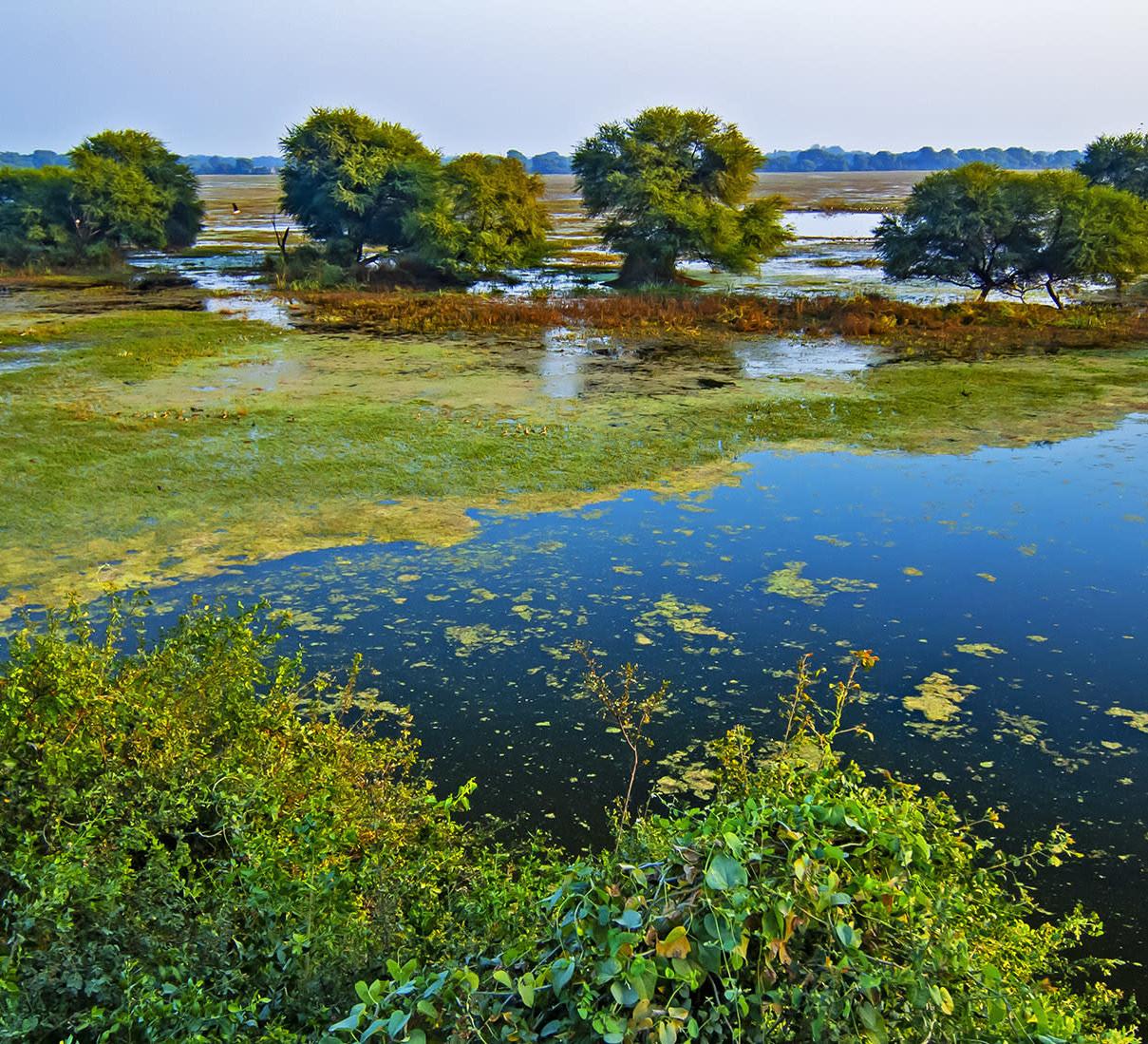 Keoladeo Ghana National Park: Floating Laboratory of Bharatpur
