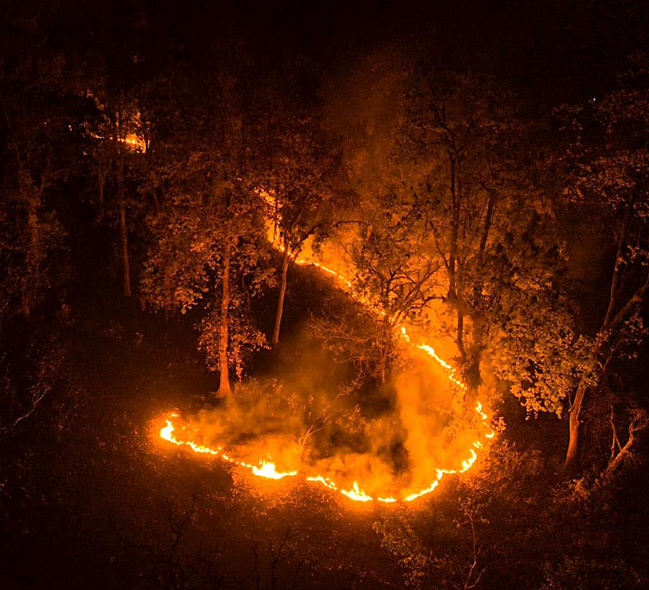 Forest fires raise questions over management of Similipal National Park