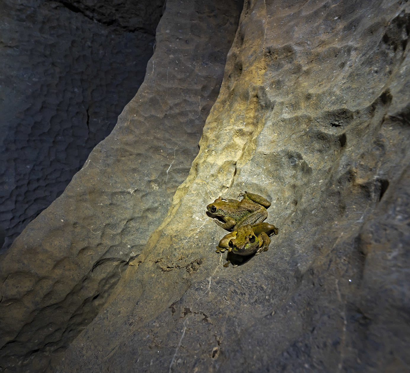 Life Without Light: Creatures of Meghalaya's Caves