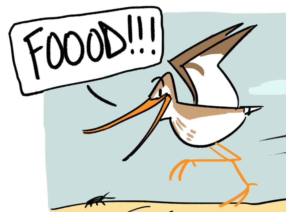 Five Stars for All! Terek Sandpiper Reviews Food