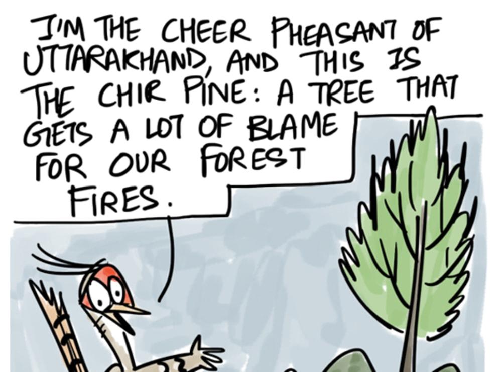 Cheer Pheasant Clears the Air on Uttarakhand Fires