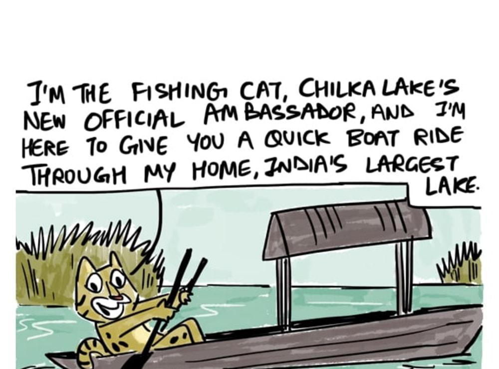 Meet Chilka Lake's New Ambassador: The Fishing Cat
