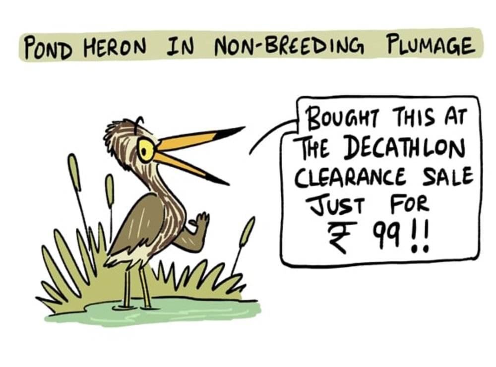 A Pond Heron's Annual Wardrobe Collection