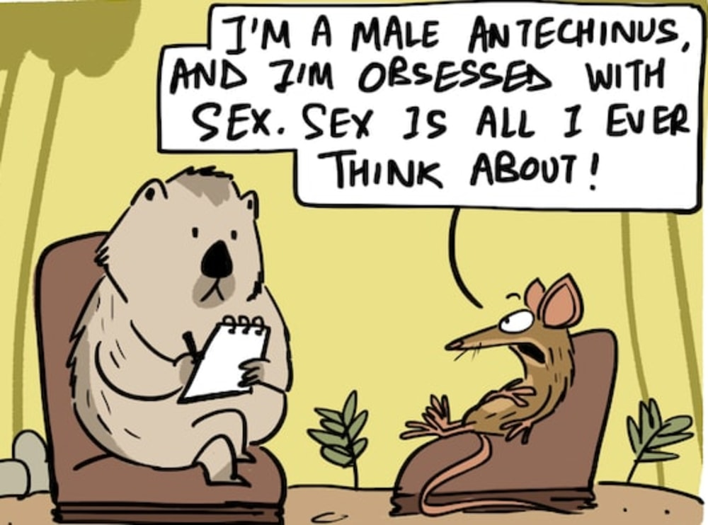 Sex Until Death: The Antechinus Can't Stop Doing it!