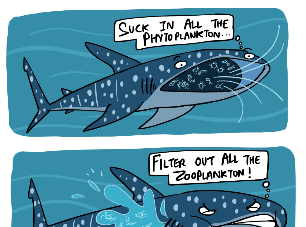 Veganism Defined by Whale sharks