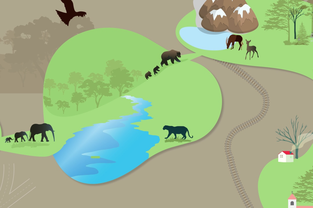 What are Wildlife Corridors?