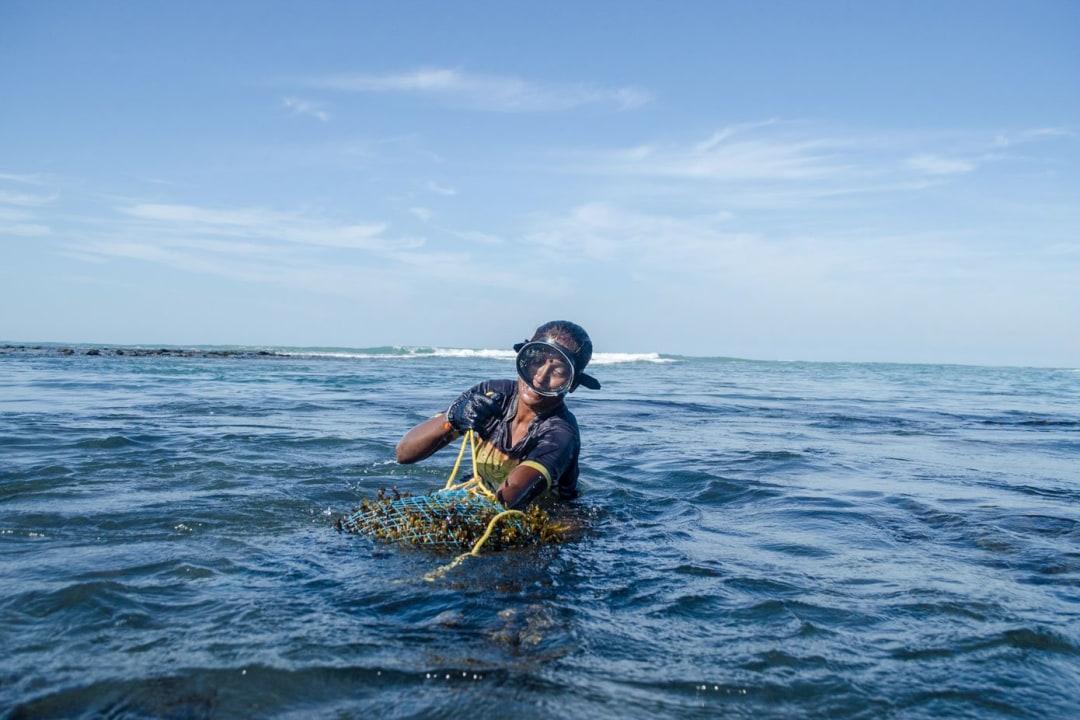 Tamil Nadu's Seaweed Harvesters in Rough Seas