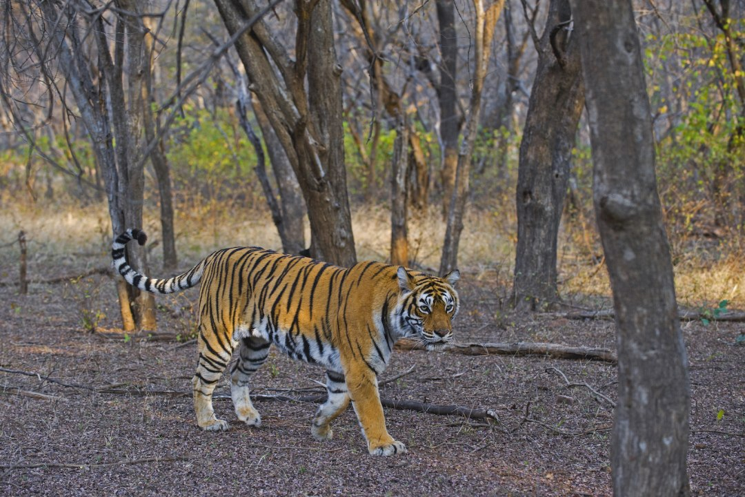 National Park Guide: Ranthambore Tiger Reserve, Rajasthan