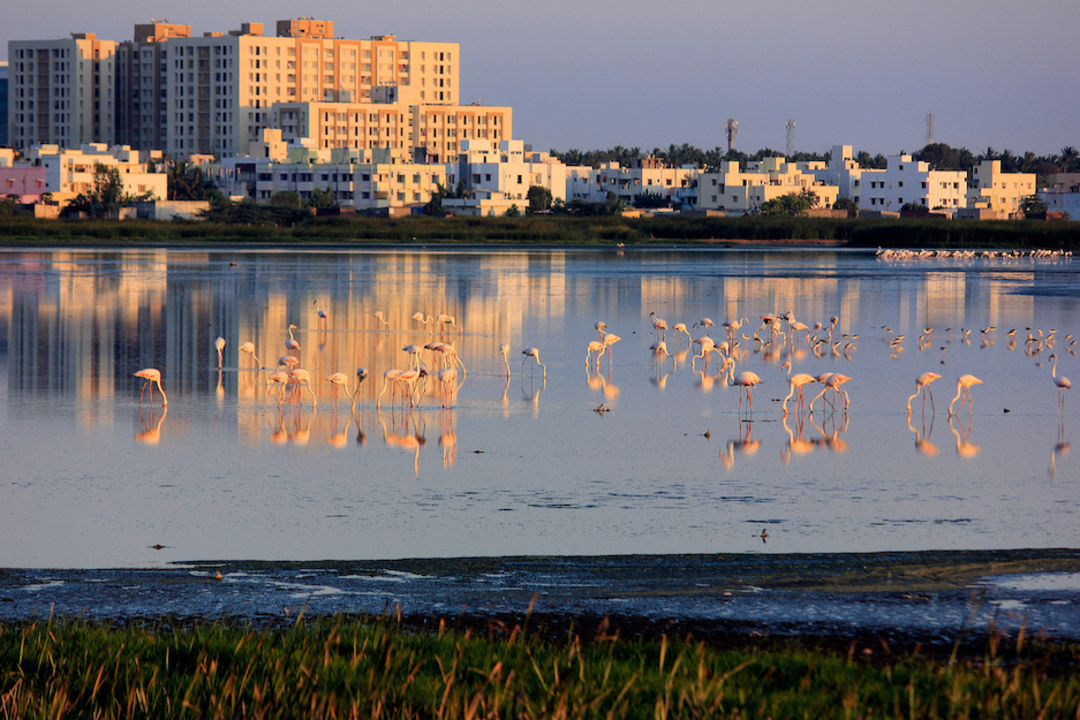 Pallikaranai Marshland: An Urban Wetland on the Brink