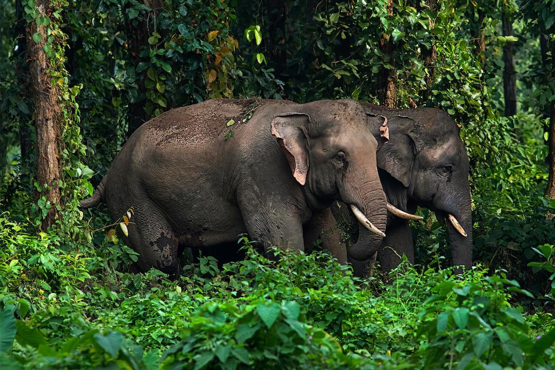 Breaking Bad: The Brotherhood of Bull Elephants