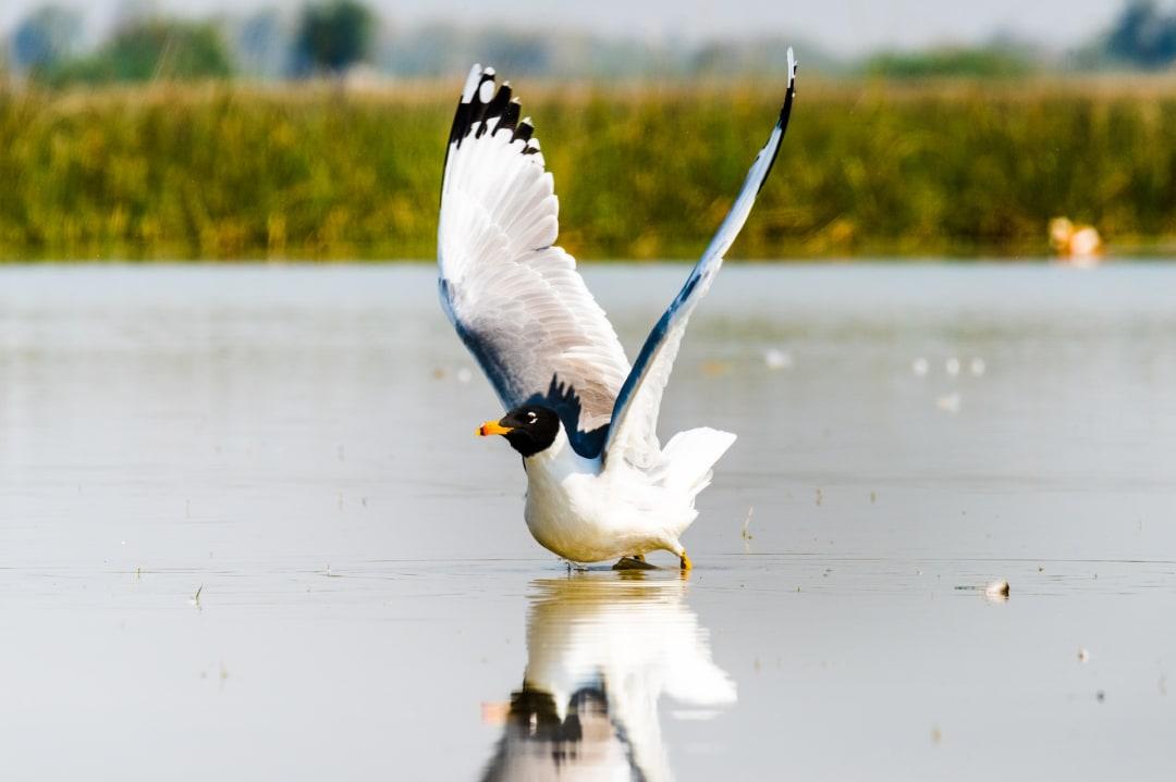The Guide: Nalsarovar Bird Sanctuary