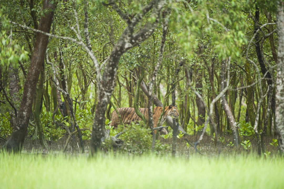 The Sundarbans Inheritance: Protecting a People's Legacy