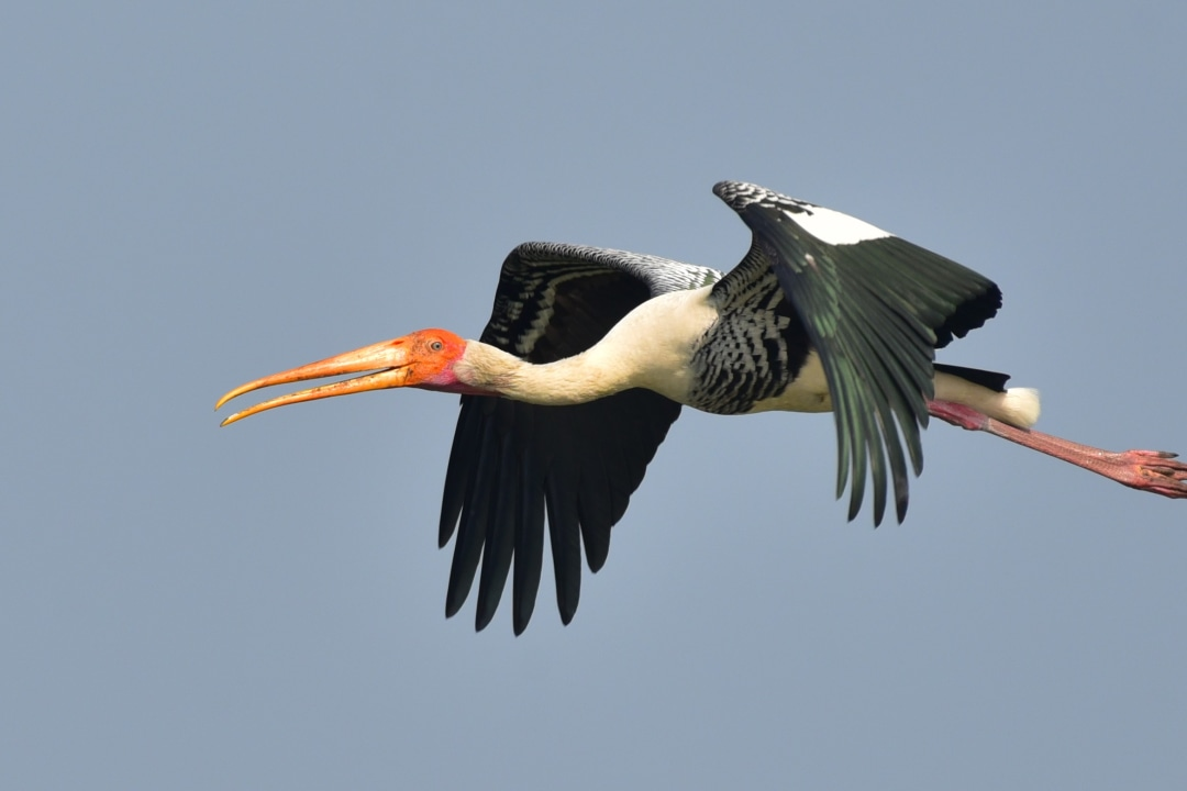 Painted Storks: Colouring the Coringa Wetlands