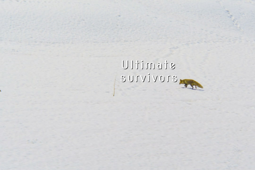 Ladakh's Ultimate Survivors