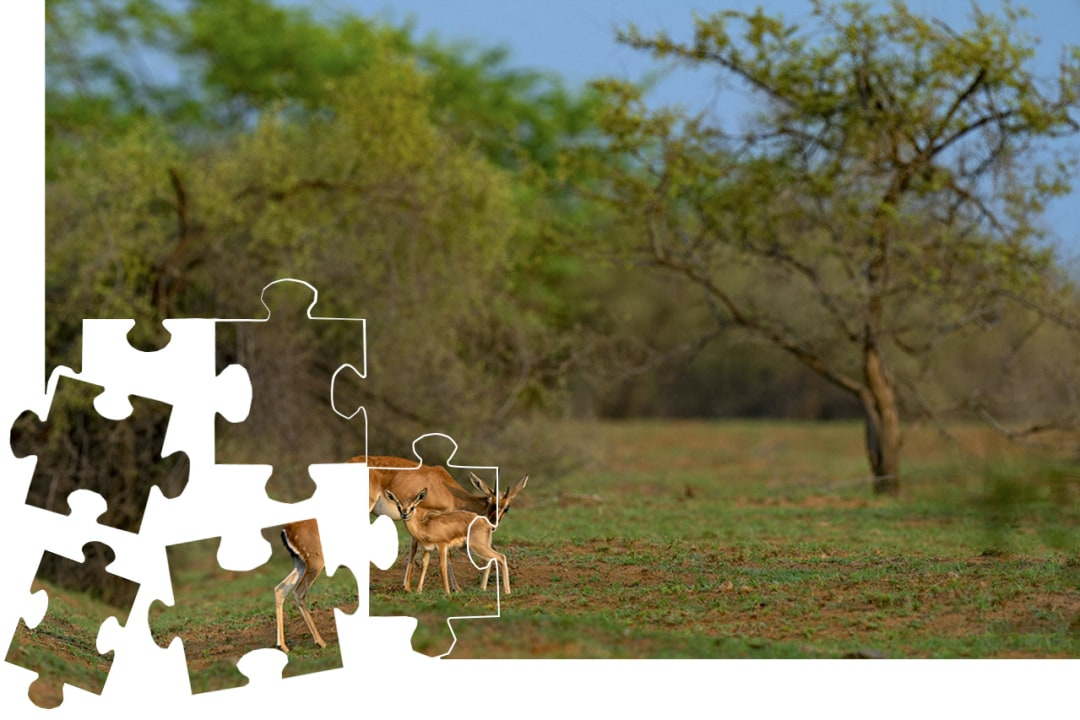 Solve this jigsaw from Desert National Park