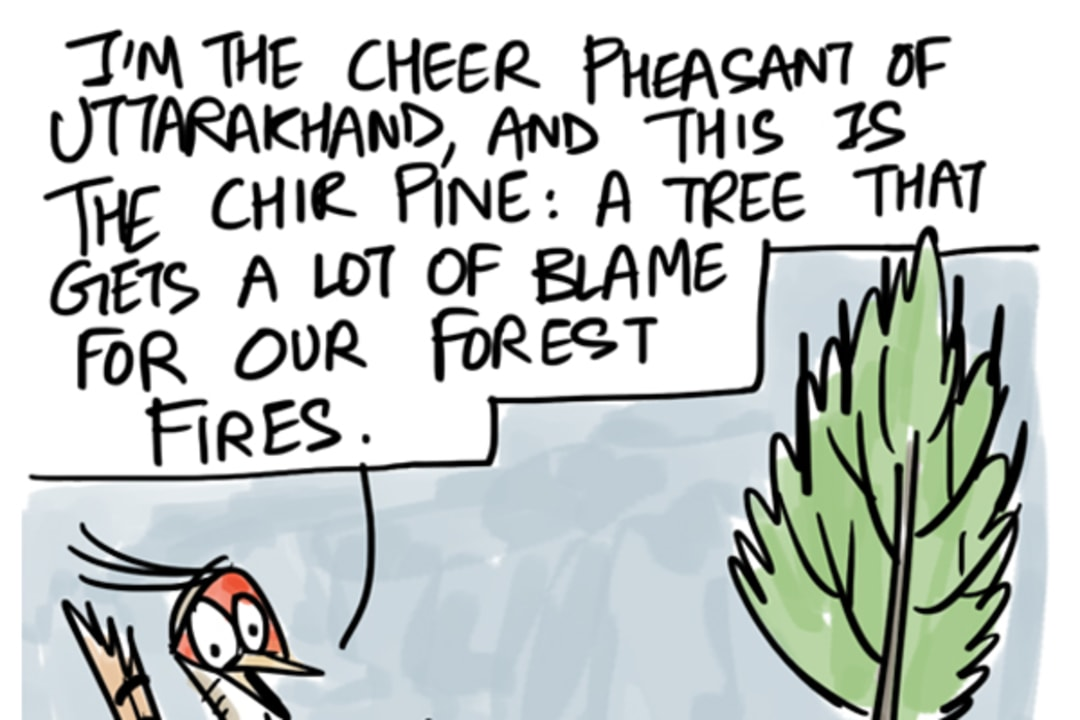 Cheer Pheasant Clears the Air on Uttarakhand Fires