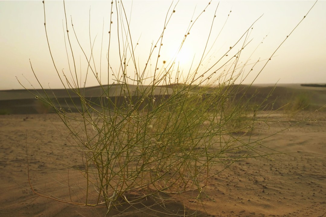 Thar: The Secret Lives of a Harsh Desert