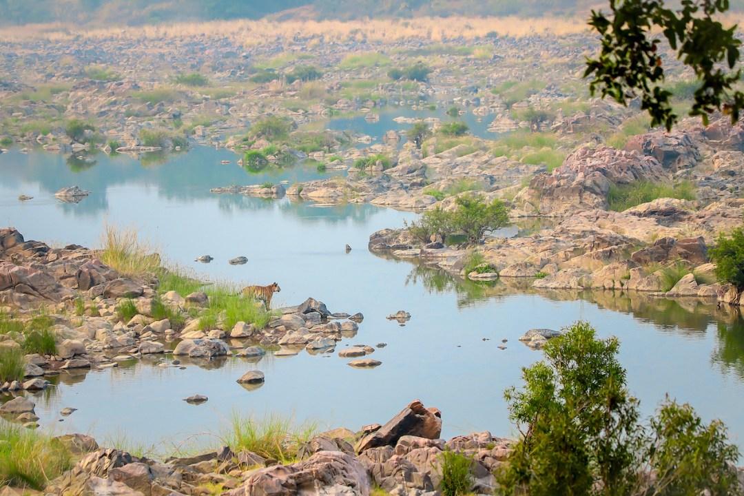 The Guide: Panna Tiger Reserve, Madhya Pradesh